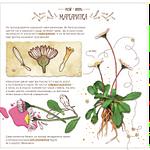 Flower img2